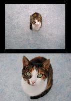 Yes, it's the same cat II by M-i-n-c-a
