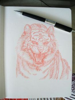 Daily Sketch 03 - tiger by QueenOfSpade