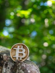 Wooden Bitcoin in nature by LadyCrosspatch
