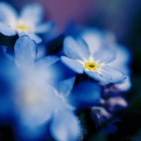 forget me. by simoendli