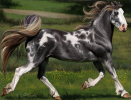 Gray Sabino Mare by Chicken-Priestess