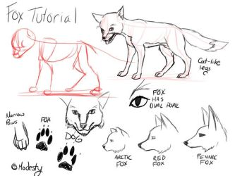 Tutorial Foxes by modesty