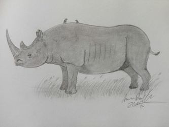 Black Rhino: Africa's Thick Skinned Browser by ArminReindl