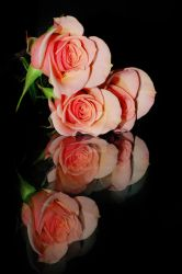 Roses on Glass by Larah88