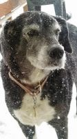 My Dog Ellie Covered in Snow by TheWizardofOzzy