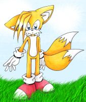 .:Tails in a field:. by Cheezyem