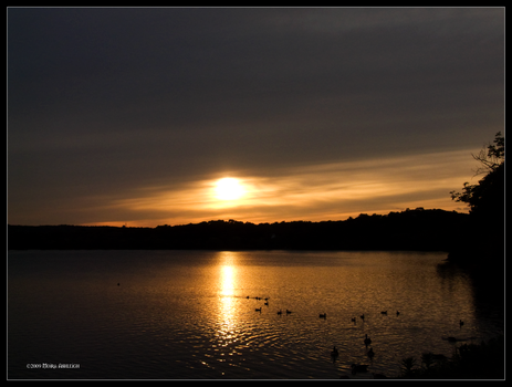 Golden Afternoon June 4 by Mogrianne