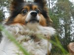 observation by Colliequest