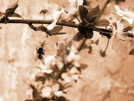 A bee by petra-gergely