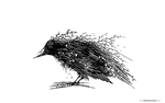 Crow by BenBASSO
