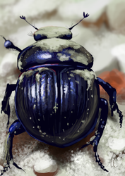Beetle by froggywoggy11