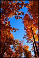 Why I love autumn by JoInnovate