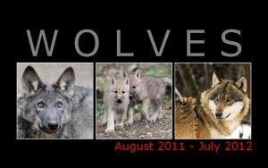 Wolf calendar 2011-12 FOR FREE by woxys