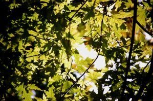 leafy canopy by Pendragon-007
