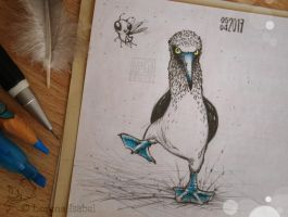 # 28 - Blue-footed booby - by Loisa