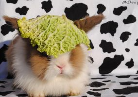 cabbage helmet by MessiMutt