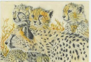 Cheetahs by Nebulae3sma