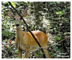 A Deer In The Woods by TheMan268