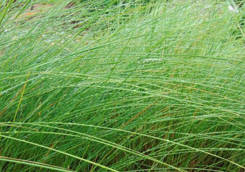 Rain drops on the grasses by knighttemplar1