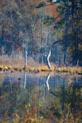 Reflections 12-2-14 by Tailgun2009
