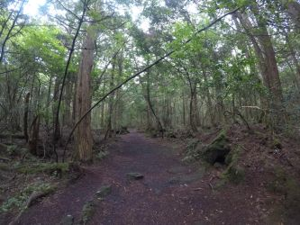 Trip to Japan #17 Aokigahara forest by AlienGirl34