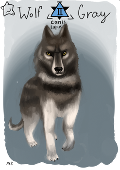 Animacards: Gray Wolf (#2) by HelgaDi