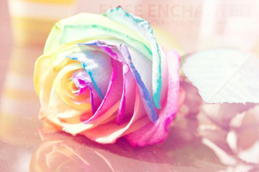 Rainbow rose by EliseEnchanted