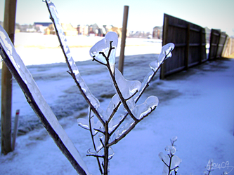 Icy Branch by yowky