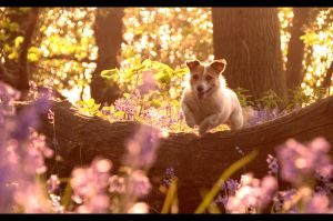 Playtime in Bluebell Woods by Lumpling