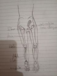 Sketch : anatomy and bones by sirisse