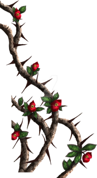 Crown-of-thorns - painted by DameOdessaStock