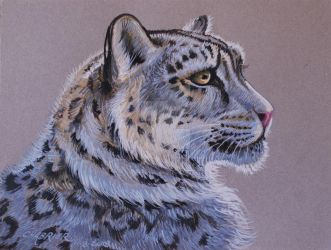Snow Leopard  by HouseofChabrier