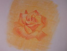 Remember me - Harkness Rose by daviniasiles
