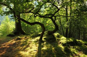 Dalegarth Woods by scotto
