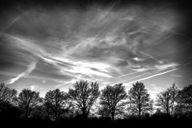 Purple Sky in Black and White by Wil-028