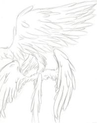 wing study by morea