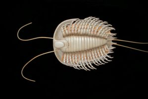 Floating Trilobite by Coi-kins