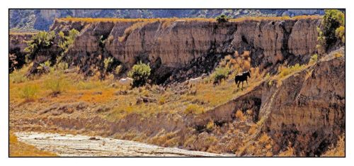 Wild horses by dry river bed, with story by harrietsfriend