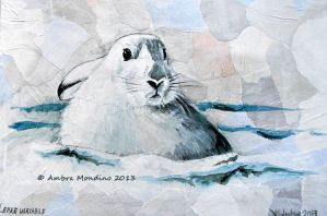 Mountain hare by flysch