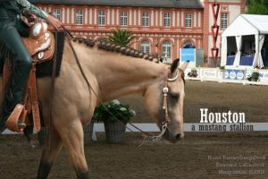 Houston Horseland Picture by Panders6