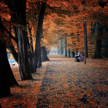 Autumn of life by WiciaQ