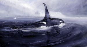 Orca bay study 1 by andrekosslick
