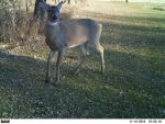 Trail Cam Buck! by ShaleseSands