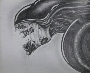 Xenomorph drawing  by DR3WZILLA