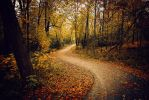 Autumn Path by AnthonyPresley