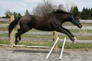 Jumping - Stock by xkatalyst33x