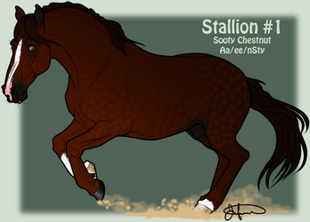 Mustang Stallion Adoption 1 by JNFerrigno