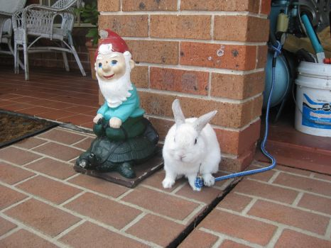 A Garden Nome and a Rabbit! by I-Have-A-Jar-Of-Dirt