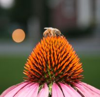 A Bee by Lestatslee