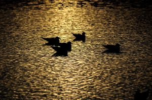 Swimming shadows by crosscut86